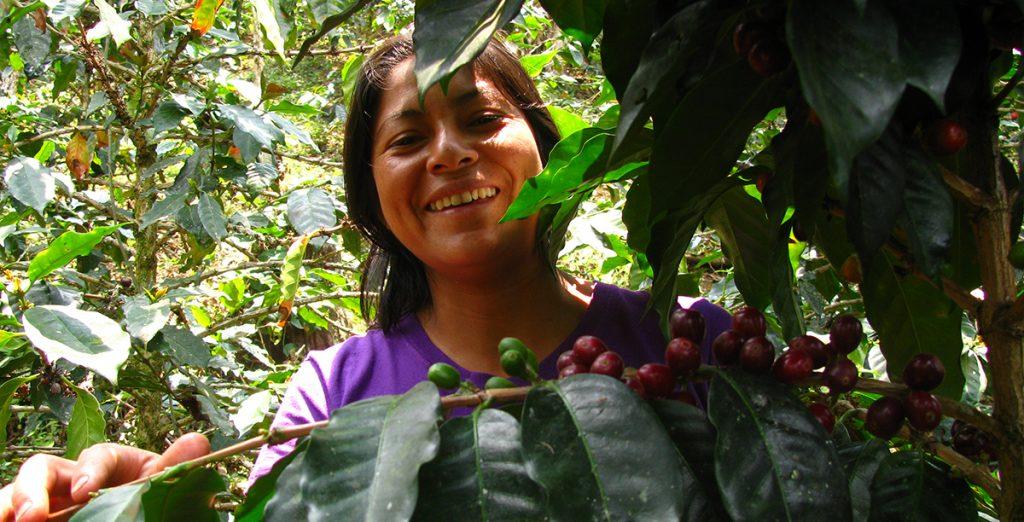 Ekoseptember - kaffeodlande kvinna vid ekologiska kaffebönor